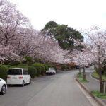 2021年春のお彼岸を迎えました。桜の満開も近い、福岡市南区平尾霊園より
